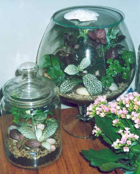 Мастер-класс: Создаём свой мини-сад в бутылке!